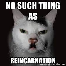 Wrathful Hitler Cat | Meme Generator via Relatably.com