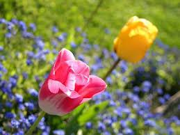 Image result for spring images no copyright