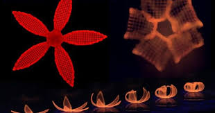 3D <b>Printing</b> Used To Create 4D <b>Flowers</b> That Change Shape Over ...