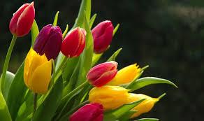نتیجه تصویری برای flower