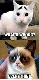 Concerned Cat | WeKnowMemes via Relatably.com