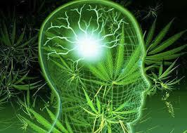 Resultado de imagem para quadro cannabis