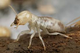 Termites Can Damage Your Home