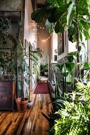 <b>Wonderplants 2</b>: stylen met groen als een pro   vtwonen