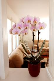 day orchid decor: my pretty pink orchid by yi you mei