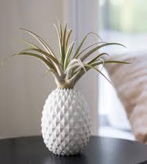 Buy <b>Plants</b> Online - Indoor <b>Plant</b> Delivery | Calyx Flowers