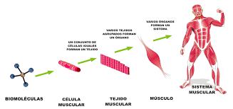 Puede ser el Universo una gran célula de un organismo vivo? Images?q=tbn:ANd9GcREoVR2_yvDtHkqQqSQ5RDwAauLta0Ng2JV40CEDHumvMrtpLgS