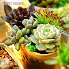 new seeds 2016 100seedspack mix succulent seeds lotus lithops bonsai plants seeds office desks beautifying office bonsai grass pots planters mini