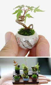 is your tiny studio apartment too tiny even for a bonsai tree nope these add bonsai office interior