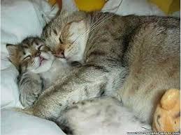Коты лапочки спят в обнимку)