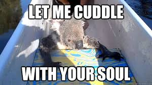 Cute Cuddly Koala memes | quickmeme via Relatably.com