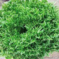 Купить <b>семена</b> зелени и пряностей в Асбесте, сравнить цены на ...