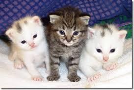 Resultado de imagen de gatos lindos bebes
