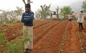 Image result for drip irrigation zimbabwe