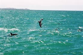 Golfinho-do-crepúsculo