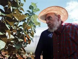 Resultado de imagen de planta de moringa