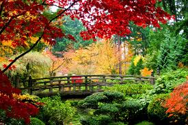 Výsledek obrázku pro japonsko příroda