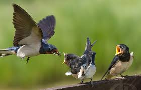 Image result for پرنده و جوجه
