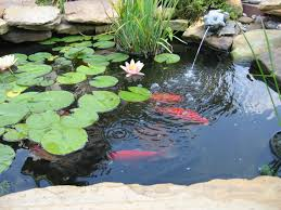 Small Picture Garden Fish Ponds Designs Zampco