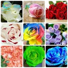 Compare Prices on Decorative Rose 200- Online Shopping/Buy ...