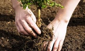 Image result for tree planting\