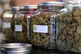 photo essay marijuana legalization in the tico medical marijuana proposal in gets health ministry review