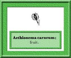 Aethionema carneum in Flora of Pakistan @ efloras.org