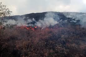 Resultado de imagen de fotos incendios forestales