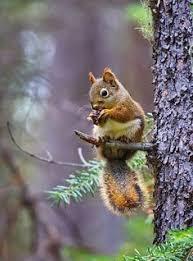 squirrels | Squirrel, <b>Squirrel feeder</b>, Animals