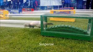 Image result for ferret racing