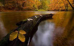 Znalezione obrazy dla zapytania zdjęcia jesieni fajne