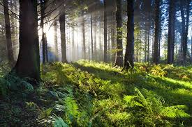 reasons why forests are important   mnn   mother nature networkunion wood sunrise
