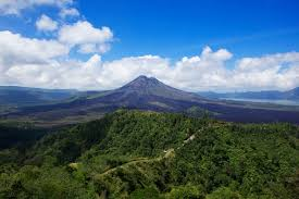 Image result for kintamani
