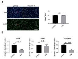 Nutrients | Free Full-Text | Vitamin D Inhibits Myogenic Cell <b>Fusion</b> ...