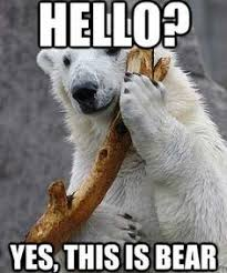 Friday bear post on Pinterest | Bears, Polar Bears and Funny Bears via Relatably.com