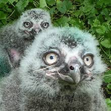 <b>New Arrivals</b>   Lincoln Park Zoo