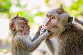 Резултат с изображение за monkey