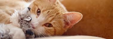 Как сделать <b>игрушку</b> для кота своими руками? | Hill's Pet