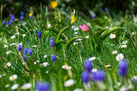 How to plant bulbs in <b>grass</b> / RHS Gardening