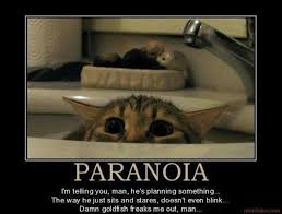 Cat paranoid | Funny Dirty Adult Jokes, Memes & Pictures via Relatably.com