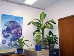 plants can enhance the decor of any office best office plant no sunlight