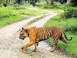 Leopard Raises Ruckus in Bengaluru School, We Are All to Blame! 7