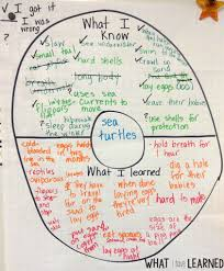 set the routine informational writing week sea turtles a mind map is a prefect tool to elicit student thinking verify their facts and