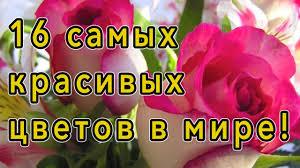Самые красивые цветы в мире! - YouTube