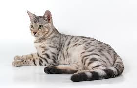 Resultado de imagem para foto de gatos