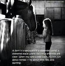 horse on Pinterest | Horse Quotes, Equestrian and Horses via Relatably.com