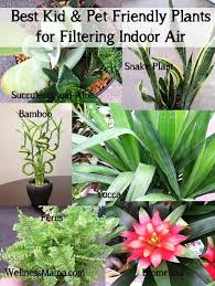 how to filter indoor air with plants brisbane office plants