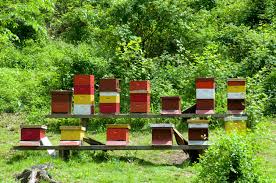 the secret lives of honeybees how honey gets made serious eats 20140617 honey bees max falkowitz hives jpg