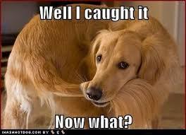 Golden Retriever | Humor Hound - Part 4 via Relatably.com