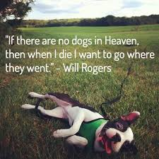 Losing A Dog on Pinterest | Dog Loss Quotes, Pet Loss Grief and ... via Relatably.com